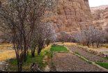 شکوفههای زمستانه درختان در روستای قطرم روایت تصویر
