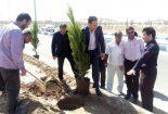 کاشت درخت امید