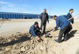 کاشت ۶۵۰ اصله نهال درخت در مجتمع فولاد بافق