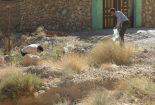 پاکسازی محیط از زباله در روستای شادکام