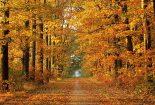 پاییز اوج هنر است