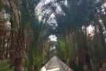 خوزستانی کوچک در یزد