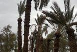 خسارت جبران ناپذیر به فضای سبز آهنشهر