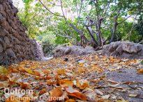 پادشاه فصلها، پاییز(تصاویری زیبا از پاییز روستای قطرم)