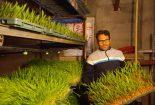 موفقیت جوان بافقی در کشت هیدروپونیک و تامین علوفه دام