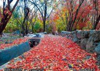 پاییز قطرم