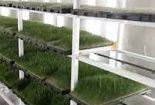 متقاضیان کاشت هیدروپونیک تسهیلات دریافت می کنند